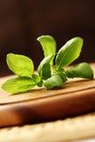 Basilic frais Photo libre de droits
