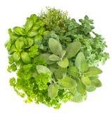 Basilic frais d'herbes, marjolaine, persil, romarin, thym, sauge Image libre de droits