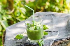 Basilic frais de céleri de concombre de mousse Image libre de droits