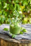 Basilic frais de céleri de concombre de mousse Photo stock