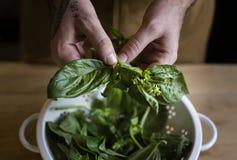 Basilic frais du jardin images stock