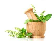 Basilic frais en mortier en bois sur le fond blanc, medici de fines herbes Photographie stock libre de droits