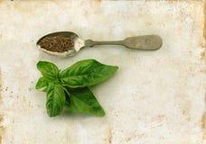 Basilic frais et sec sur la cuillère Photos libres de droits