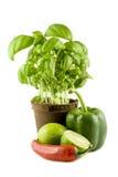 Basilic, limette, /poivron et paprika vert d'isolement Photo libre de droits