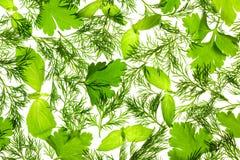 Basilic, persil et aneth/fond frais Image stock