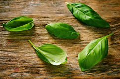 Basilic vert Image libre de droits