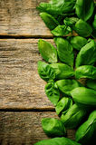Basilic vert Photo libre de droits