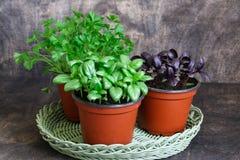 Basilic vert, basilic rouge, persil Images stock