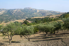 Basilicata (Potenza) - Acerenza. Ancient town and olive trees Stock Image