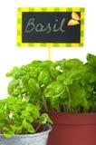 Basilico Fotografie Stock Libere da Diritti