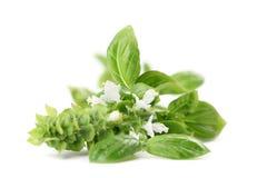 Basilico di fioritura immagine stock
