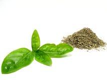 Basilico dolce Immagini Stock