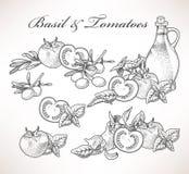 Basilico e pomodori Immagine Stock