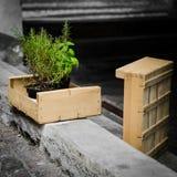 Basilico e rosmarini Fotografia Stock