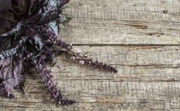 Basilico fresco su fondo di legno Fotografia Stock Libera da Diritti