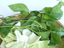 Basilico tailandese e cavoli bianchi Immagini Stock