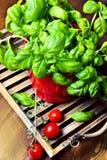 Basilico in un POT con i pomodori Fotografie Stock Libere da Diritti