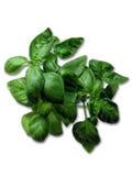 Basilico verde Immagini Stock Libere da Diritti