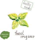 Basilico verde dell'acquerello Royalty Illustrazione gratis