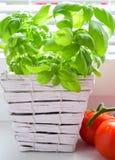 Basilicum en tomaten, kersentomaat Stock Fotografie