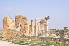 Basiliek in Volubilis, Meknes Marokko Stock Foto's