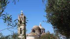 Basilika och olivträd för kupol för Klocka torn gammal royaltyfri bild