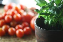 Basilika och tomater Arkivfoto