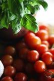 Basilika och tomater Fotografering för Bildbyråer