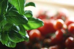 Basilika och tomater Arkivbild