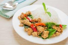 Basilika stekte ris med griskött, thailändsk mat Royaltyfri Bild