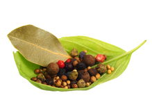 Basilikas blad med kryddor Royaltyfria Bilder
