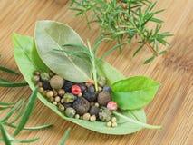 Basilikas blad med kryddor Royaltyfri Bild