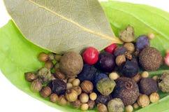 Basilikas blad med kryddor Arkivfoton