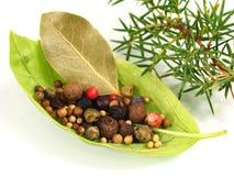 Basilikas blad med kryddor Royaltyfri Foto