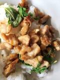 Basilikasidor och kryddigt griskött stekte på varma ris Royaltyfri Fotografi