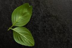 Basilikum auf einem schwarzen Hintergrund Lizenzfreie Stockfotografie