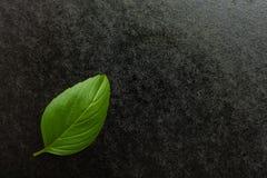 Basilikum auf einem schwarzen Hintergrund Stockfoto