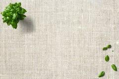 Basilikum, Minze, Küchenblätter auf grünem und gestricktem Hintergrund lizenzfreie stockfotografie