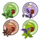 Basilikum, Minze, Lavendel, Anis Satz Aufkleber des ätherischen Öls Stockbilder