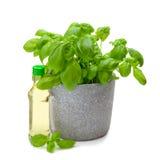 Basilikum plant Stock Photo