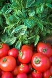 Basilikum u. rote Tomaten lizenzfreies stockfoto