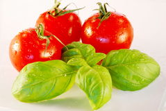 Basilikum und Tomaten lizenzfreie stockfotografie