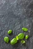 Basilikumblätter auf schwarzem Stein Stockfotos