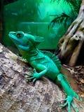 Basilisco con cresta verde fotos de archivo