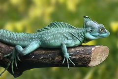 Basiliscus plumifrons Royalty Free Stock Images