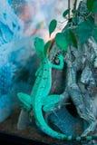 Basilisk Basiliscus basiliscus sits with on the roots of a tre Royalty Free Stock Photo