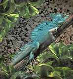 Basilisk Lizard Royalty Free Stock Images