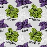 Basilu i oregano wzór Obrazy Stock
