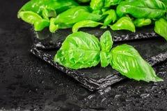 Basilów liście na czarnym łupku Zdjęcia Royalty Free