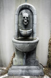 Basin skull Stock Photography